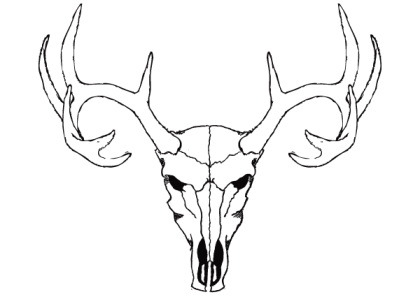 Deer Skull Vector Free