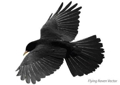 Flying Raven Free Vector Art