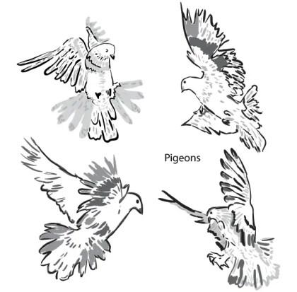 Artistic Pigeons Vector Pack