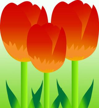 Free Vector Colorful Tulips
