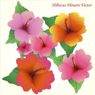 Hibiscus Flowers Vector Art Free