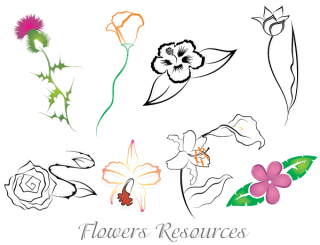 Free Vector Images of Flowers