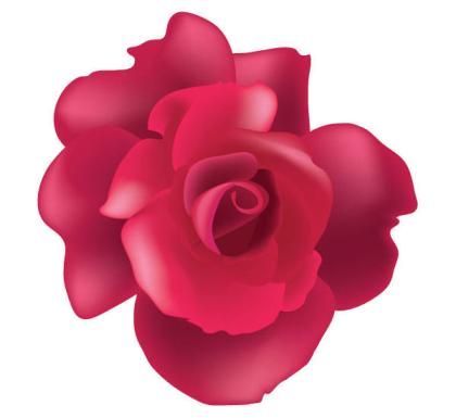 Vector Rose Flower Free