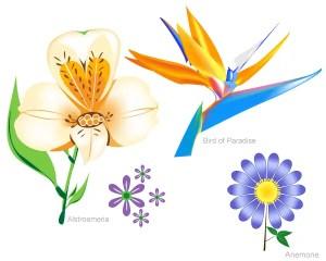 Flowers Free Vector Set