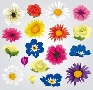 Colorful Flowers Vector Illustrator Pack