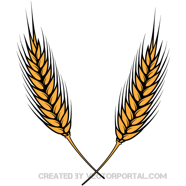 wheat vector illustrator 123freevectors rh 123freevectors com wheat vector free wheat vector logo