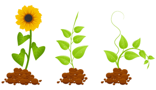 Eco Germinal Plants Vector Graphic