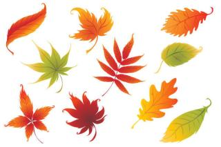 Nine Colorful Leaves Vector Graphics