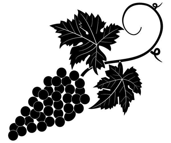 Grapevine Vector Image 123Freevectors