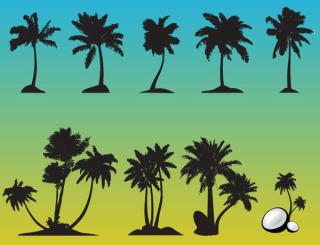 Palm Tree Free Vector Set