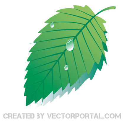 Vector Graphics Green Leaf with Water Drops