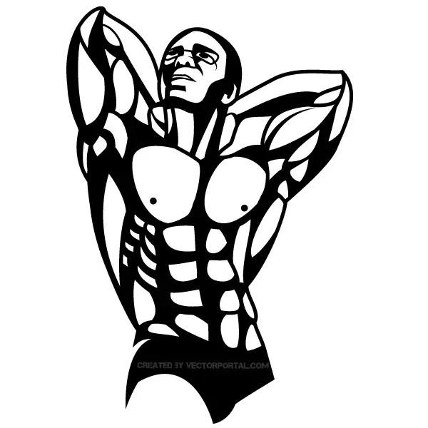 Bodybuilder Vector Art
