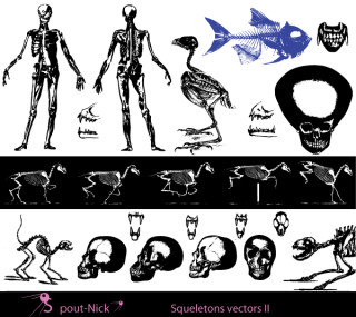 Free Skeleton Vector Images