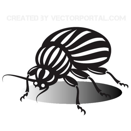 Beetle Insect Graphics Free Vector