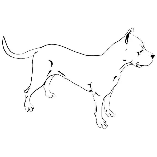 Pitbull Dog Free Vector