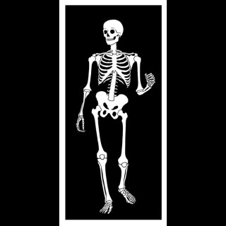 Skeleton Image Free Vector