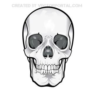 Skull Clipart 2 Free Vector
