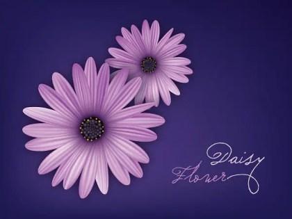 Daisy Flower Free Vector