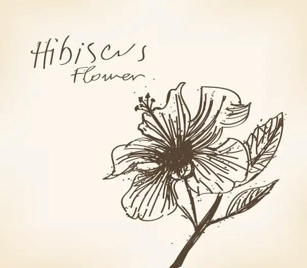 Hibiscus Vector Free Download