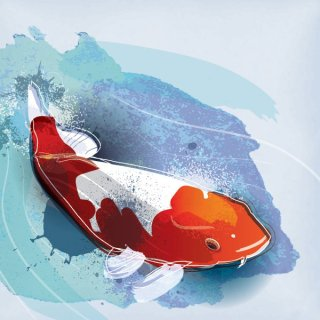 Koi Fish Free Vector