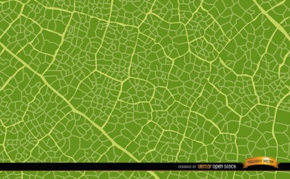Green Leaf Texture Background Free Vector