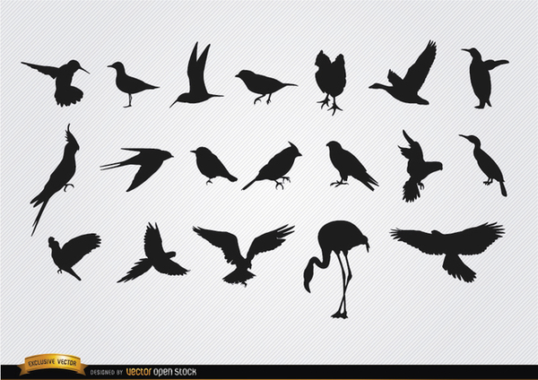 Species Of Birds Silhouettes Set Free Vector