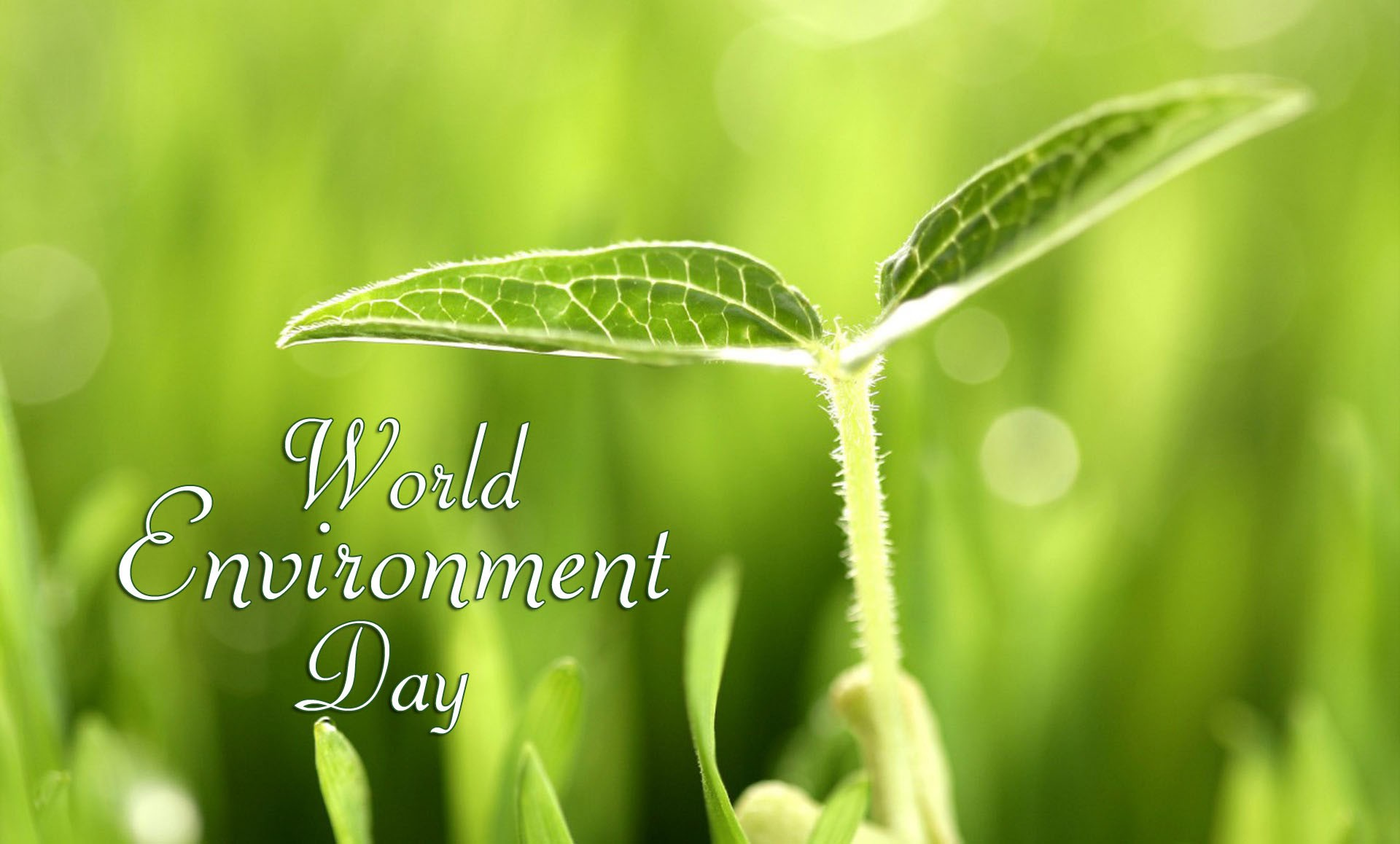 World Environment Day Images Wallpapers Banners Amp Photos
