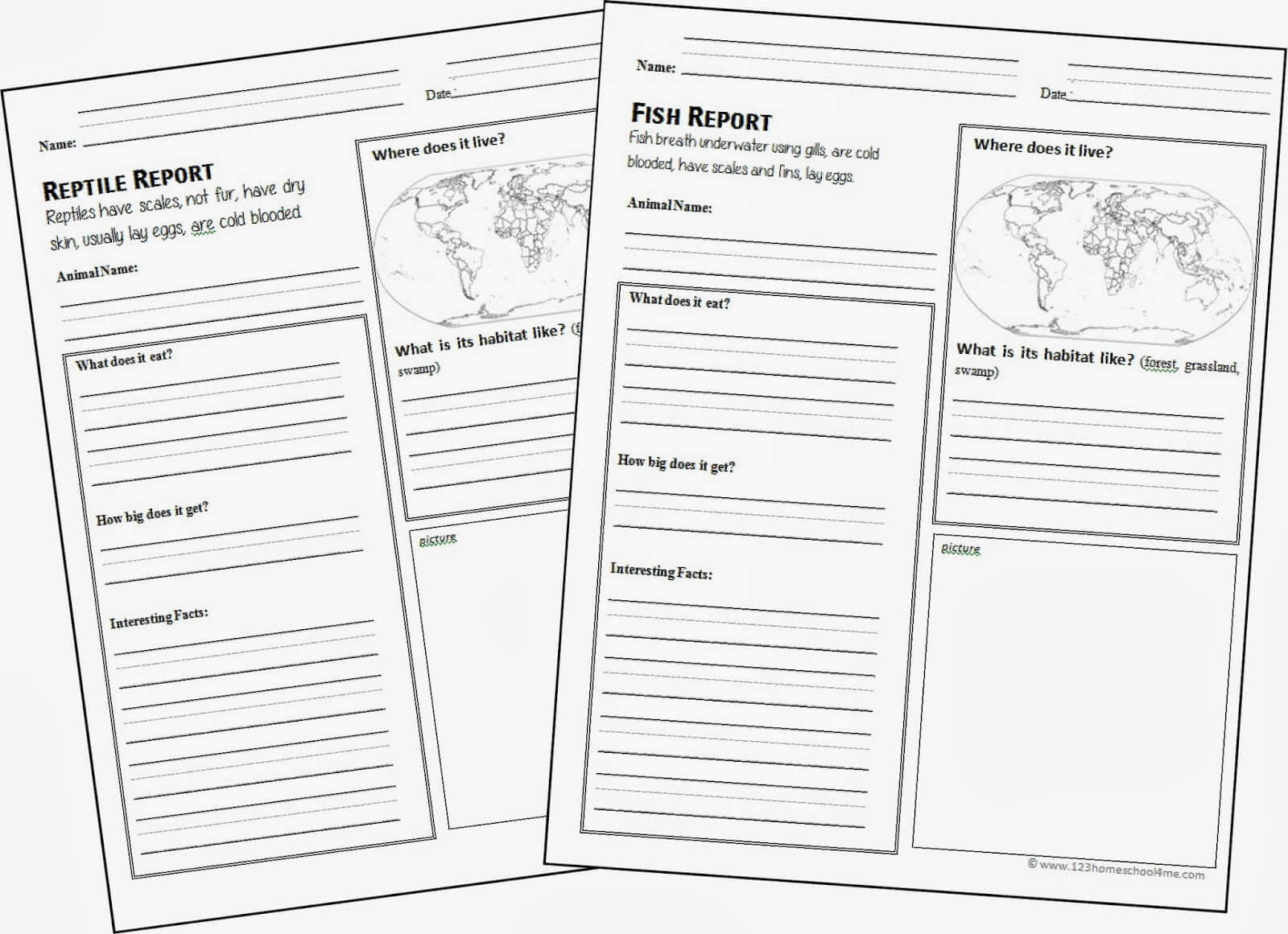 Free Animal Report Template