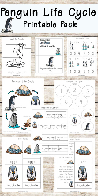Penguin Life Cycle Worksheets