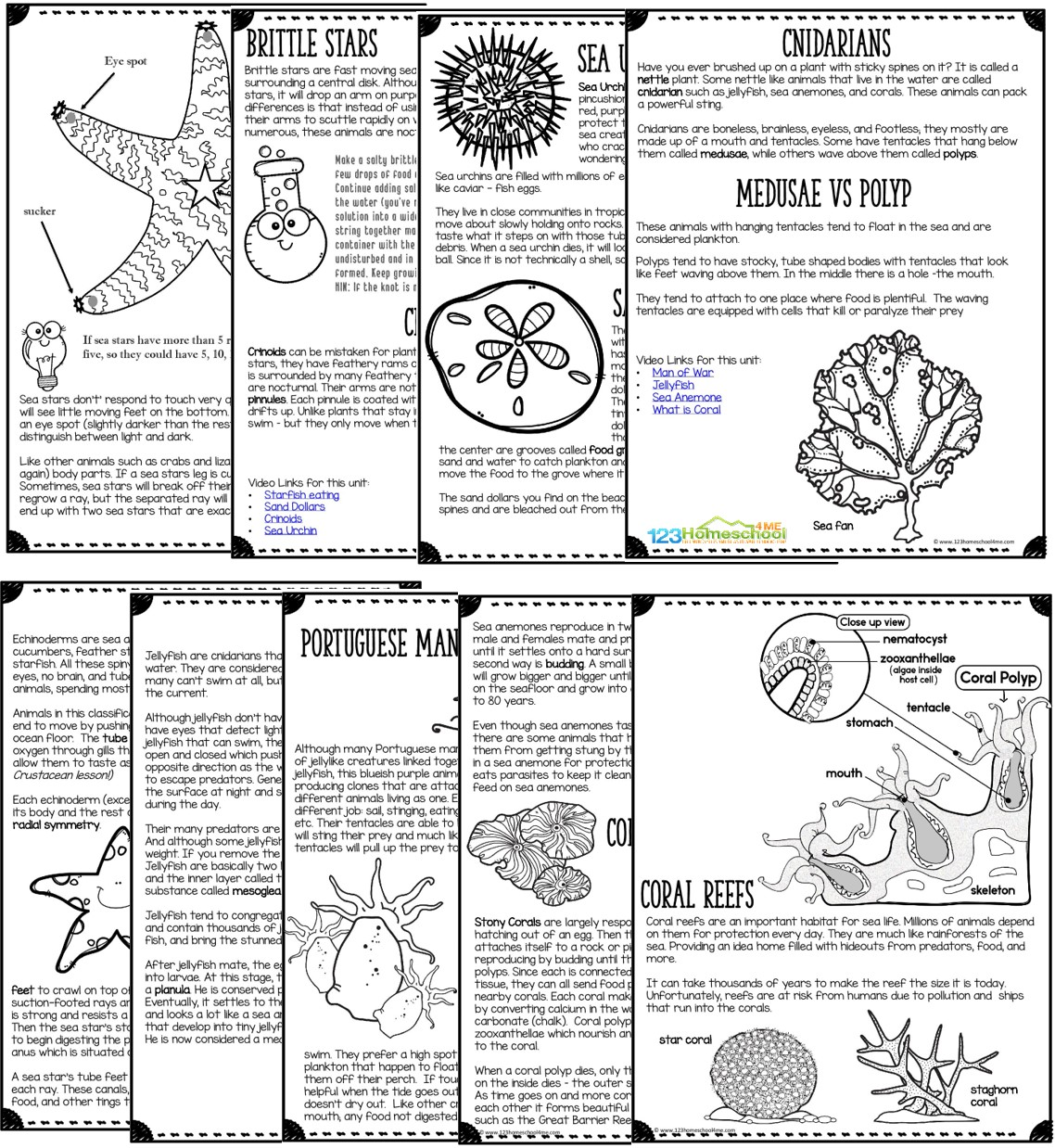 All About Echinoderms Amp Cnidarians
