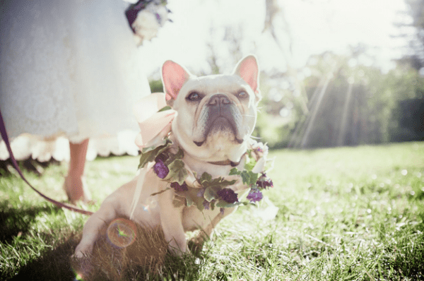 Wedding pose of dog