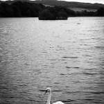 Carlingwark Loch, Castle Douglas