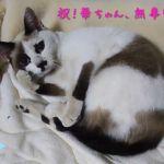 【速報】片山先生の華ちゃんが見つかりました!
