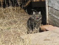 220px-Feral_cat_with_clipped_ear