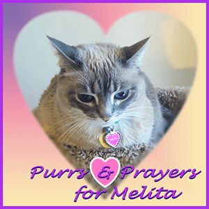 Purrs and Prayers for MELITA Badge