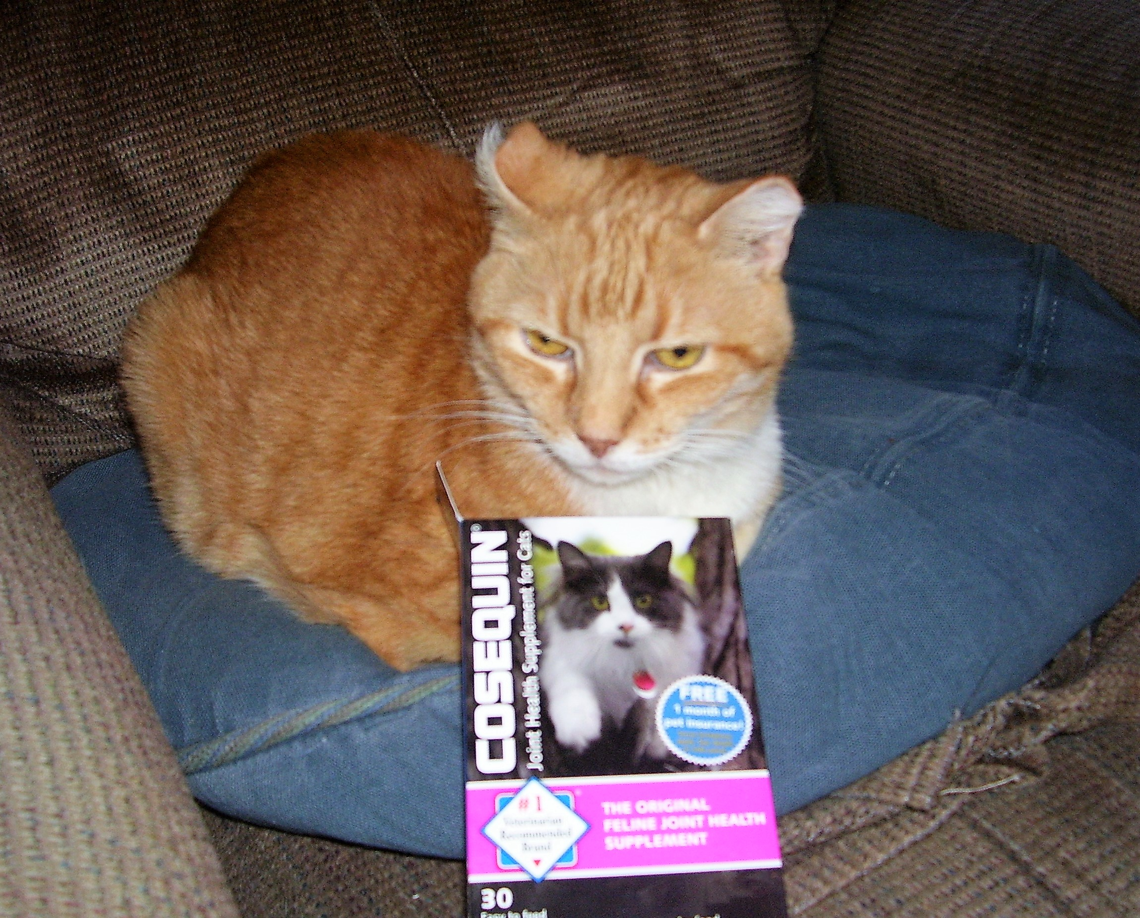 nutramax cosequin for cats reviews nutramax cosequin for cats 80 sprinkle capsules pet review. Black Bedroom Furniture Sets. Home Design Ideas
