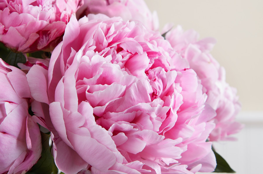 Flower Color Meaning Symbolization Of Flower Colors