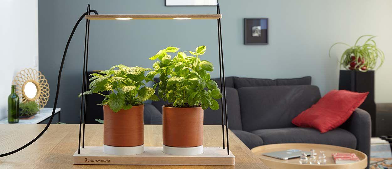 Cultiver Des Herbes Aromatiques Chez Soi Potager D