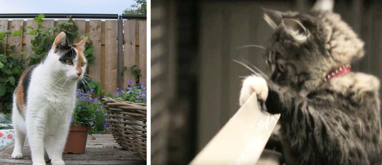 une super solution pour empecher votre chat de faire le mur