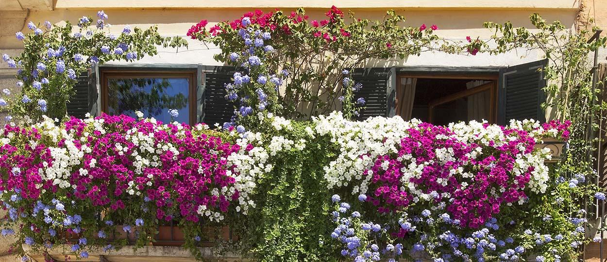 Quelles Plantes Choisir Pour Cacher Son Balcon De La Vue
