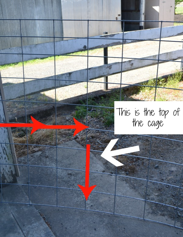 Diagram on how to cut tomato cage sides out of a cattle panel