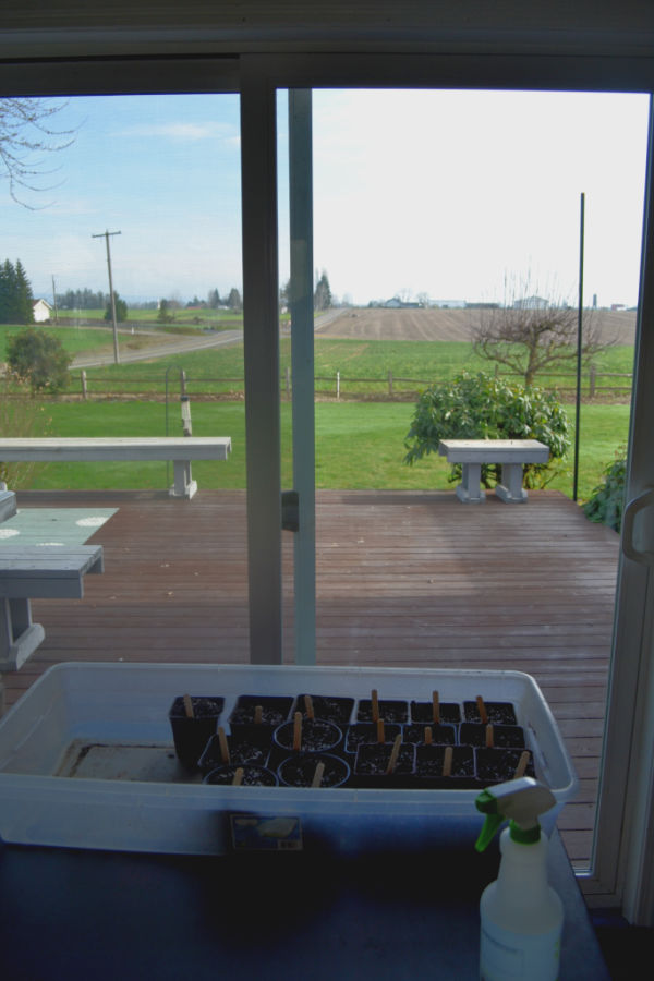 Looking out a window facing East with a container full of seed pots with stick labels sitting on a table near the window