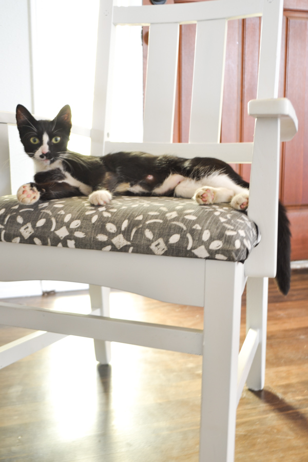 A close up of a dining room chair that is white with blue and white fabric seat with a black and white cat laying on the seat