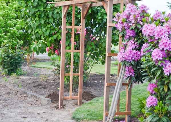 A redwood garden arch pictured from the side with a rhodedendron on the right and a lilac tree on the left with a driveway on the left