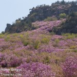 My Adventure to Mt. Daegeumsan for the Ultimate Photo Shot…Geoje Island