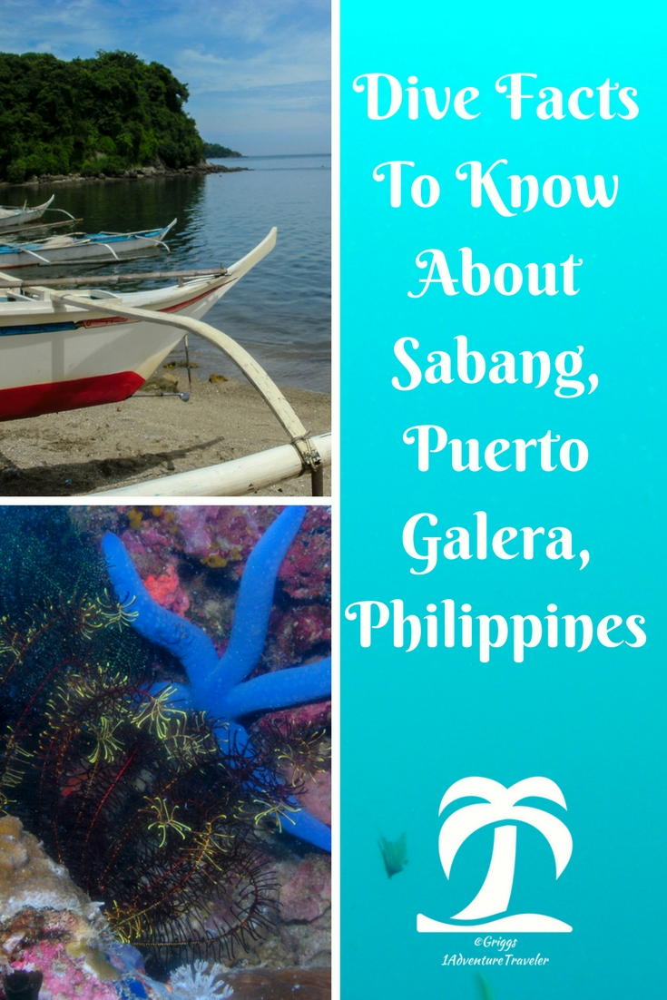 Interesting Dive Facts To Know About Sabang - 1AdventureTraveler | Dive Sabang, Puerto Galera, Philippines. One of the top 10 dive destinations in according to a dive magazine. Follow me on my diving journey | Puerto Galera | Philippines | Sabang | travel | dive | scuba | scuba diving | ocean | sea life | fish | travel photography |