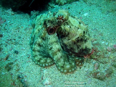 Interesting Dive Facts To Know About Sabang - 1AdventureTraveler   Dive Sabang, Puerto Galera, Philippines. One of the top 10 dive destinations in according to a dive magazine. Follow me on my diving journey   Puerto Galera   Philippines   Sabang   travel   dive   scuba   scuba diving   ocean   sea life   fish   travel photography  