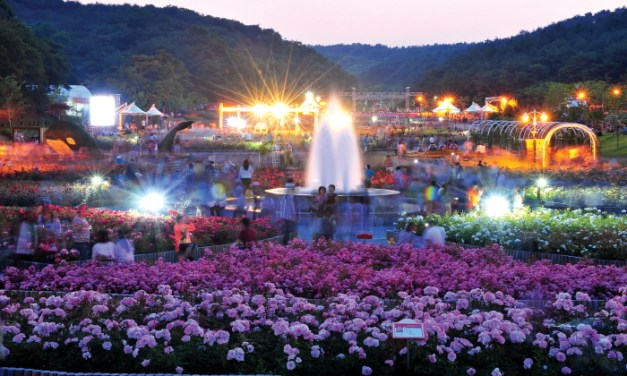 Largest Rose Festival Ulsan