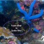 How to Scuba Dive for Adventure Travel