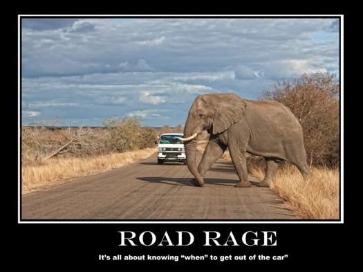 Kruger Park - Tusker